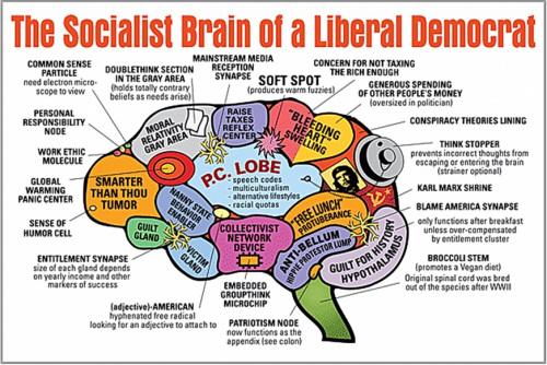 libtard-social-justice-warrior-democrat-brain